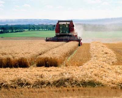 Миниатюра для: Власти области не допустят необоснованного повышения цен на сельхозпродукцию в связи с введенными санкциями