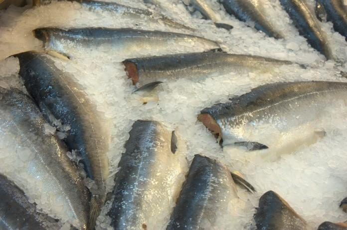 Миниатюра для: На поддержку рыбной отрасли в Томской области направлено 19,5 млн руб.