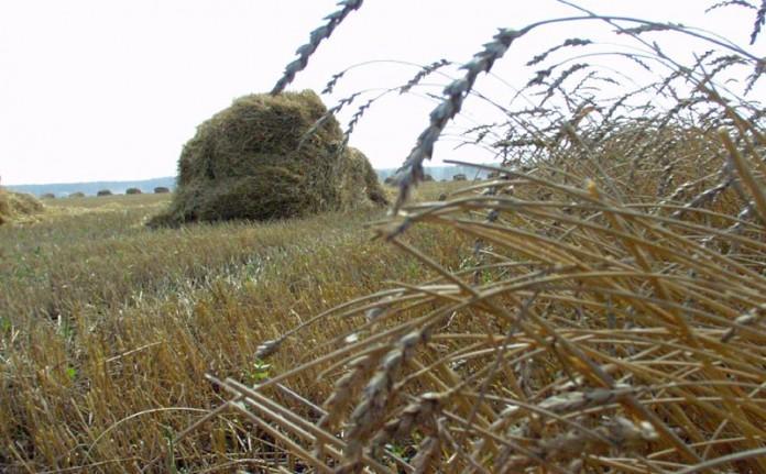 Миниатюра для: Тариф на перевозку зерна по железной дороге может быть снижен для сибирских производителей в два раза