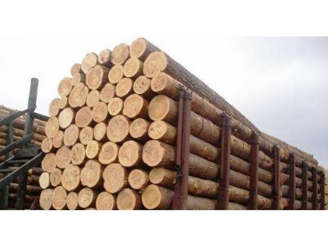 Компания не вернула в Россию плату за лес на сумму 1