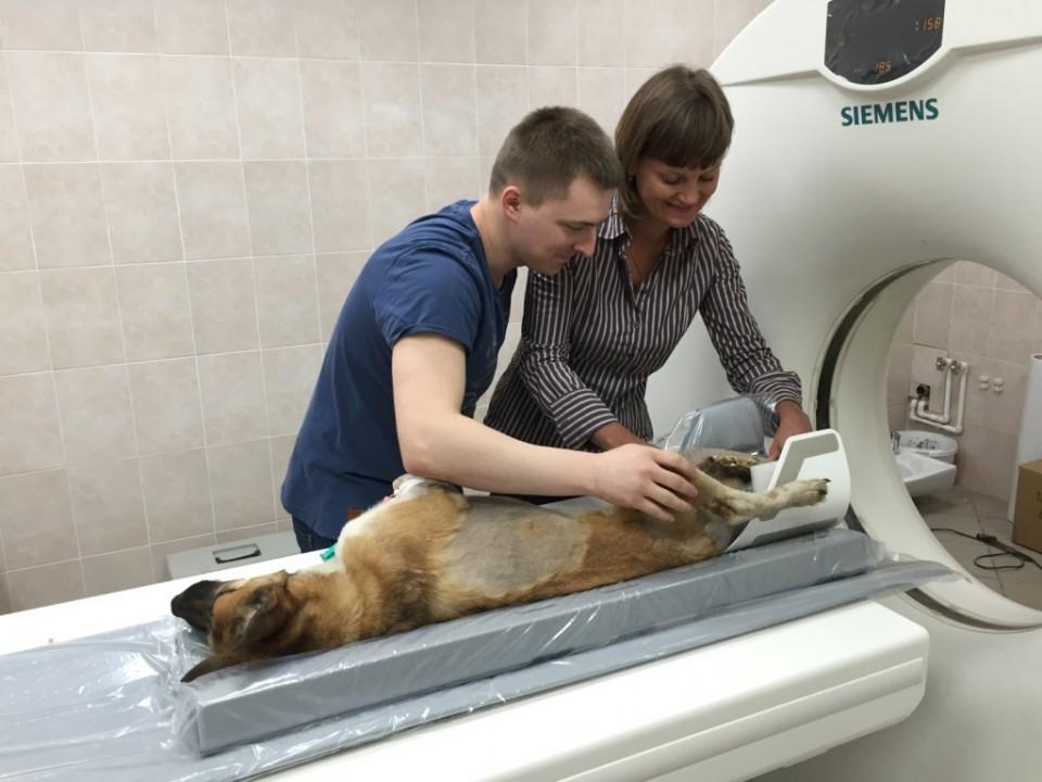 Оснастить клинику современным ветеринарным оборудованием сегодня можно при помощи лизинга. Фото: пресс-служба «Сименс Финанс».