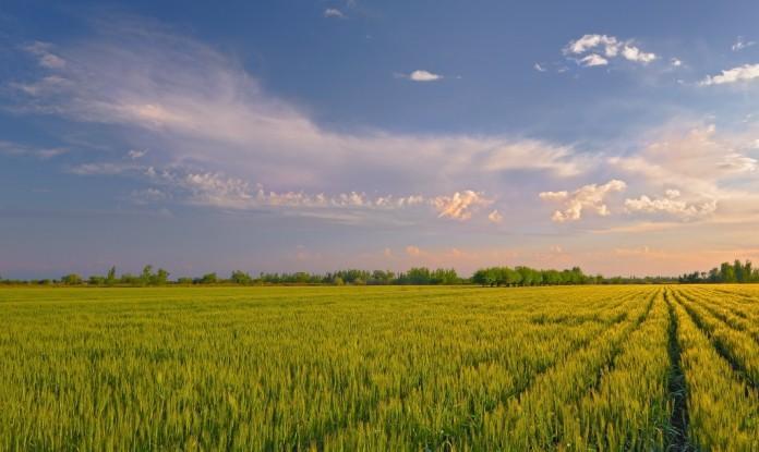 Субсидии на поддержку растениеводства получают все сельхозпроизводители