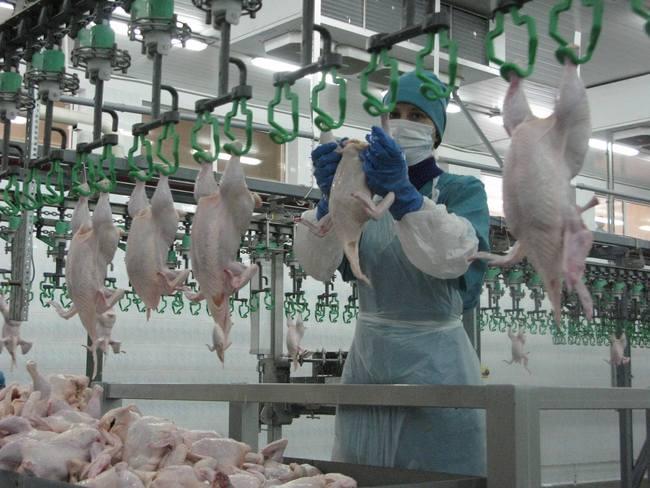 Пятая часть сибирского мяса скота и птицы производится в Алтайском крае. Фото: subscribe.ru