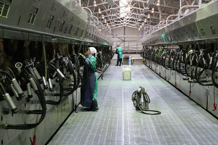 Субсидия предназначена для компенсации сельским производителям части затрат на производство или отгрузку каждого отдельного килограмма молока. Фото: twitter.com
