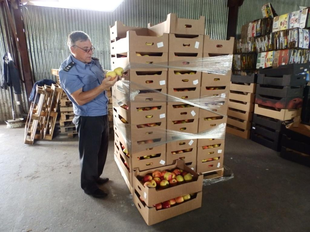 С 6 августа в обязанности Россельхознадзора входит изъятие и уничтожение санкционных продуктов питания.