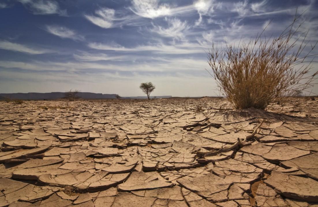 Режим ЧС из-за засухи объявлен в 18 районах Бурятии.