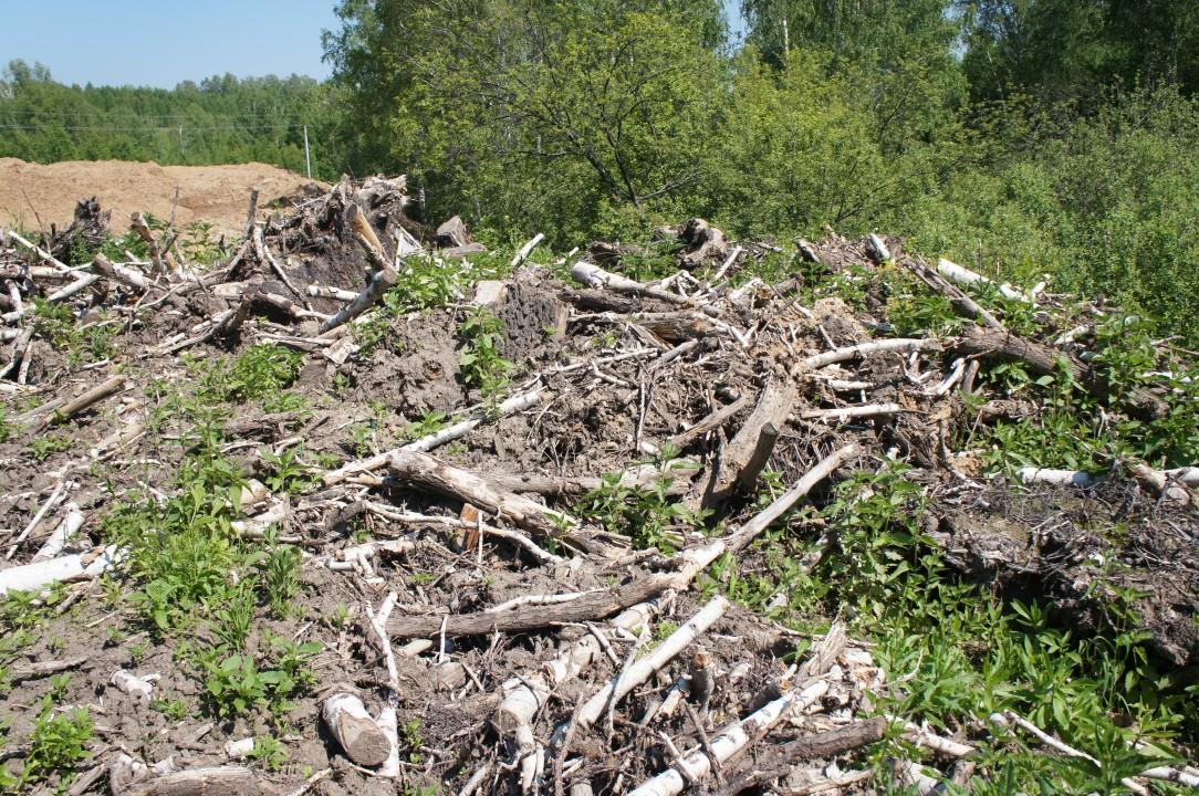 По данным Управления Россельхознадзора НСО, на фото изображена несанкционированная свалка порубочных остатков, обустроенная сотрудниками «Сибмоста».