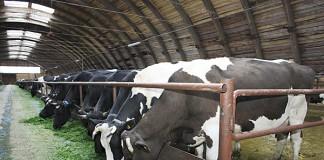 Несколько инвестпроектов в сфере АПК, включая строительство молочных ферм на 100 тыс. голов скота, намерены до 2030 года реализовать в Томской области китайские инвесторы.