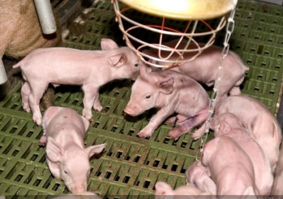 Наряду с производственными помещениями в состав имущественного комплекса ООО «Фунтики» войдёт и две с половиной сотни голов животных.
