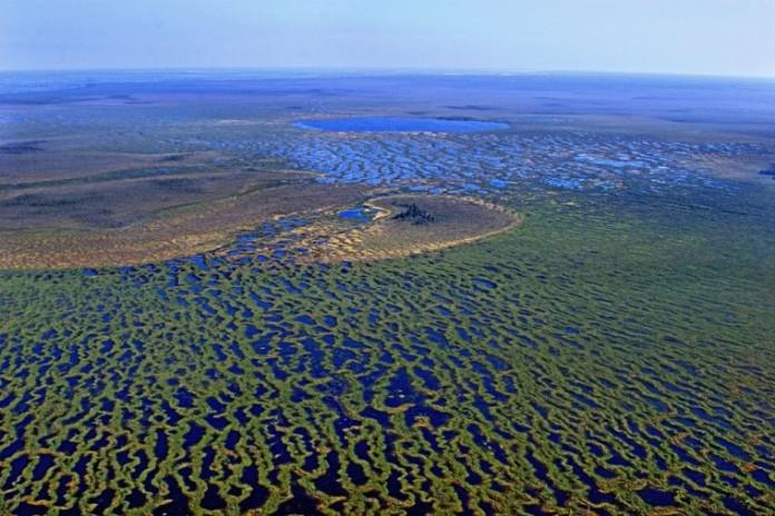 Васюганское болото, которое станет особо охраняемой природной территорией, считатся одним из самых больших болот в мире.