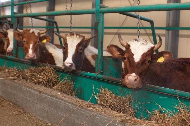 Наиболее продуктивные хозяйства Томской области смогут получать повышенную субсидию за реализованное молоко - в случае если коровы демонстрируют особо высокую производительность.