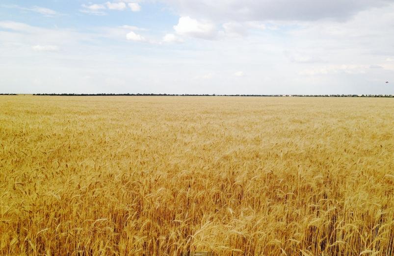 «Газпромнефть-Региональные продажи» представили алтайским аграриям комплексные решения по обеспечению сельского сезона топливом.