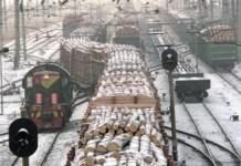 Десятки тысяч кубометров леса были вывезены железной дорогой через Иркутскую область.