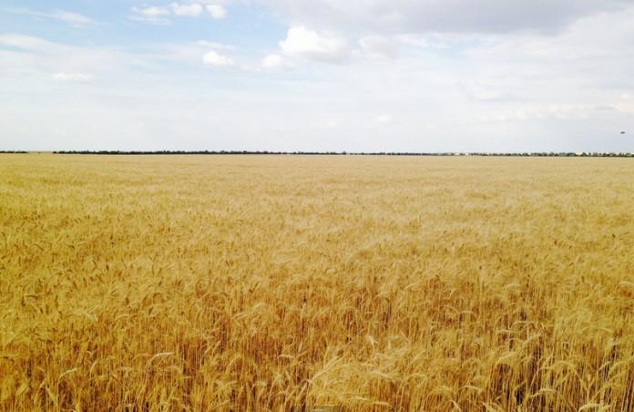 Миниатюра для: Россельхозбанк участвовал в заседании  Минсельхоза РФ по развитию сельского хозяйства