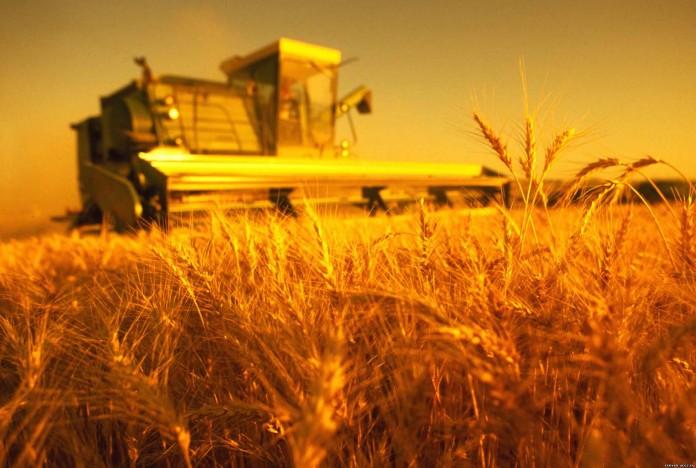 Миниатюра для: ВТБ в Сибири с начала года предоставил аграриям порядка 3 млрд руб
