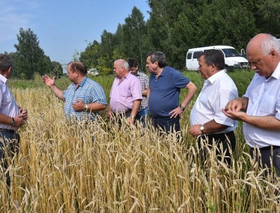 Неменее 22 млн тонн сельхозкультур прогнозируется собрать вРК в текущем 2016