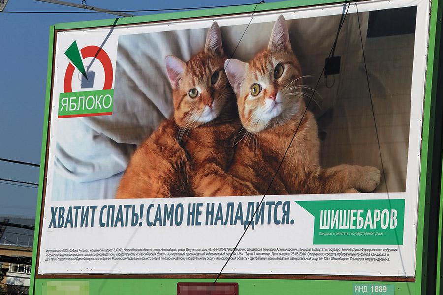 03_07_cats