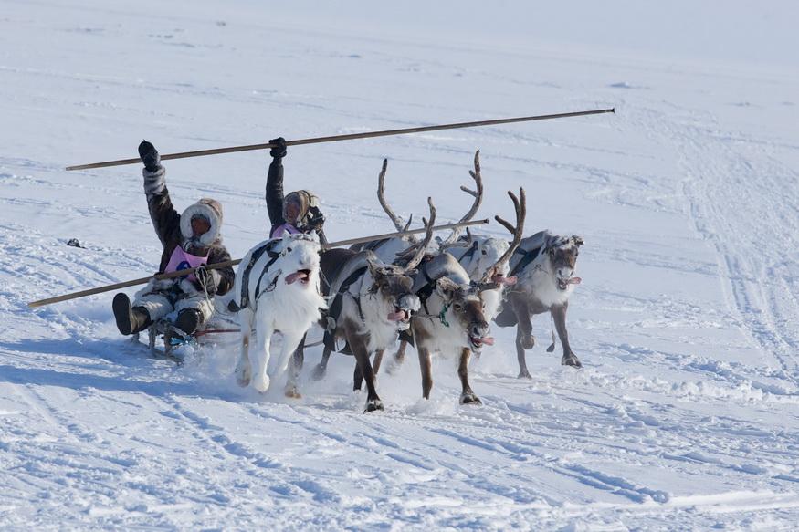 280 млн руб будет направлено на поддержку коренных малочисленных народов  Таймыра ~ Континент Сибирь Online