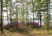Число лесных пожаров в Забайкалье увеличивается