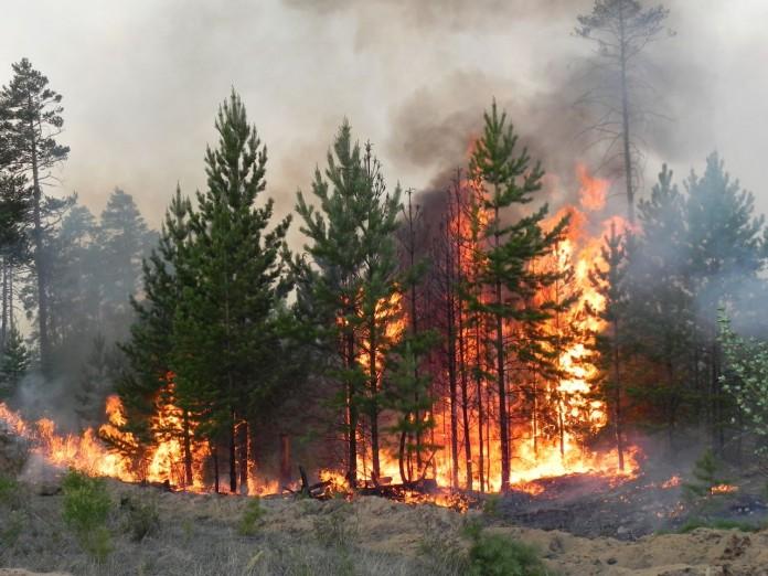 Число и площадь лесных пожаров в Бурятии увеличивается