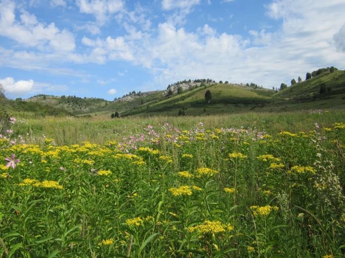 Алтайский край и республика Алтай лидируют в экологическом рейтинге