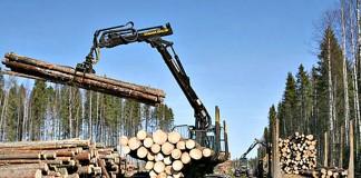 Инвестпроекты в сфере лесного хозяйства