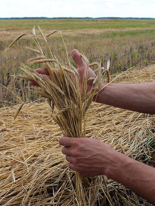 Растениеводство и переработка зерна