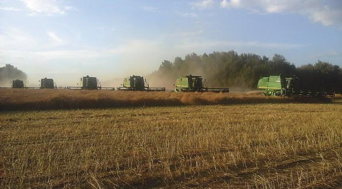 Краснозерский район: флагман зернового полеводства с потенциалом создания крупных перерабатывающих производств