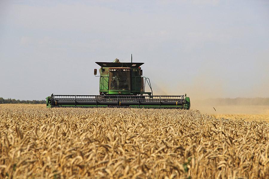 Краснозерский район - уборка зерна