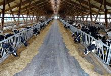 Каргатский район: лидер по производству молока