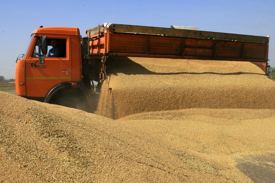 Новосибирская область увеличила экспорт зерна, яиц ипуха