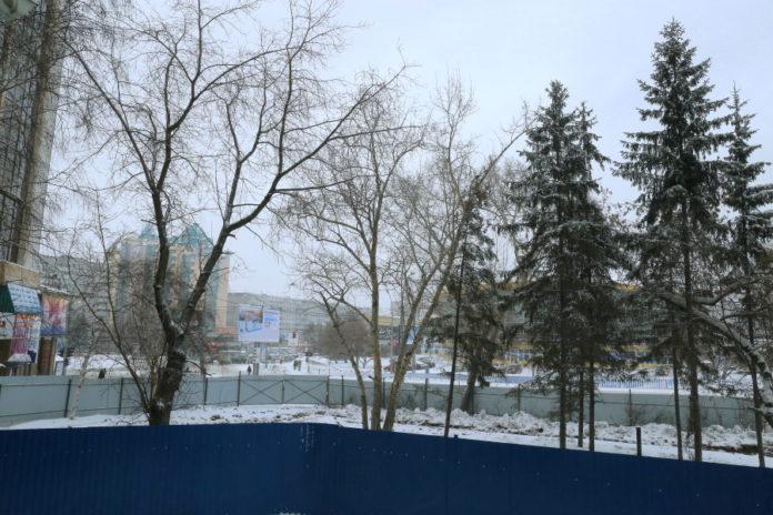 Миниатюра для: Анатолий Локоть возмущен вырубкой деревьев на ул. Челюскинцев, 50