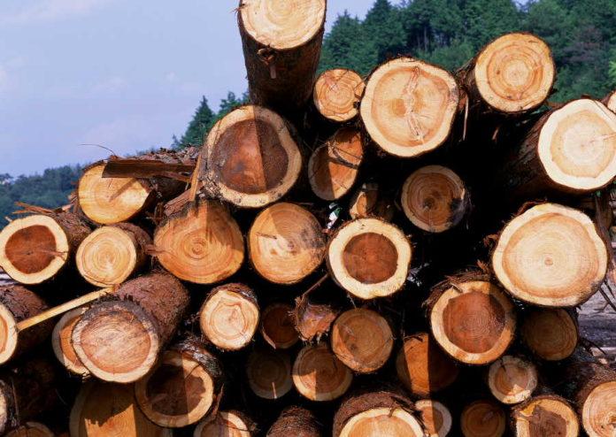 Миниатюра для: Красноярский край запустил проект биржевой торговли древесиной