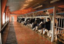 Ордынский район: молочный бум и титановые недра