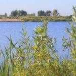Садоводческое некоммерческое товарищество собственников недвижимости «поселок Чистые луга»