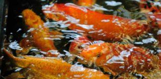 Рыбные хозяйства Новосибирской области
