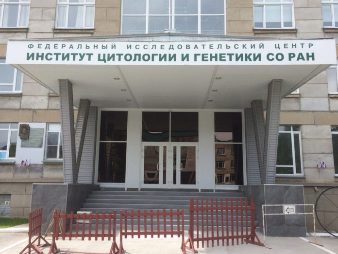Миниатюра для: Институт СО РАН предложил создать в Новосибирске Национальный центр генетических технологий