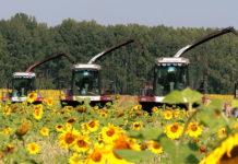 На развитие сельского хозяйства в Красноярском крае потратят почти 7 млрд рублей