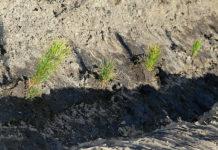 Рекультивации поврежденной земли опробуют в Кузбассе