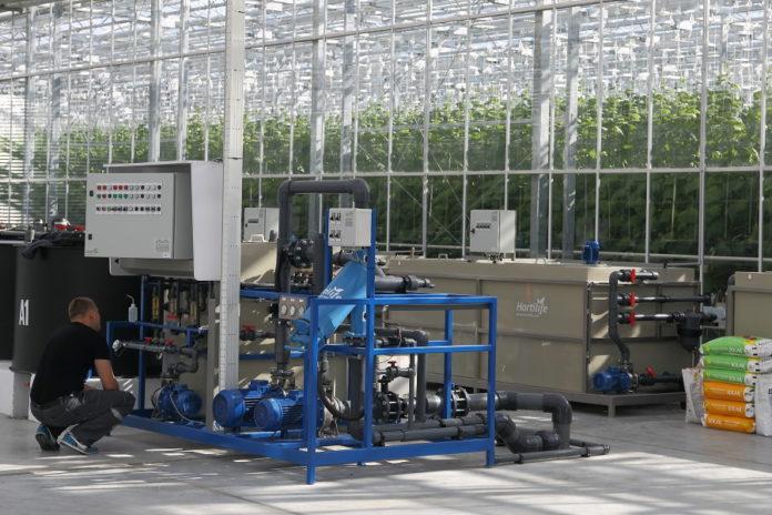 Миниатюра для: Тепличный комбинат «Толмачевский» на четверть увеличит производство овощей