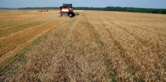 Суд запретил властям Красноярского края поддерживать региональных сельхозпроизводителей