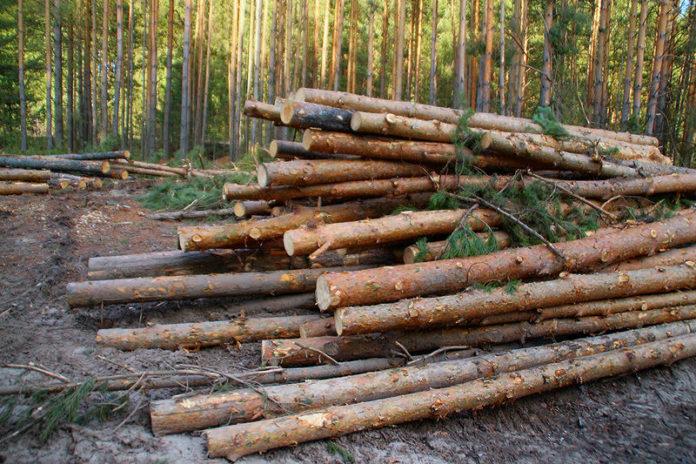 Промышленная компания вырубала лес и добывала золото в новосибирском заказнике