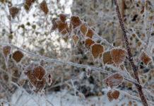 В Новосибирск возвращаются морозы и порывистый ветер