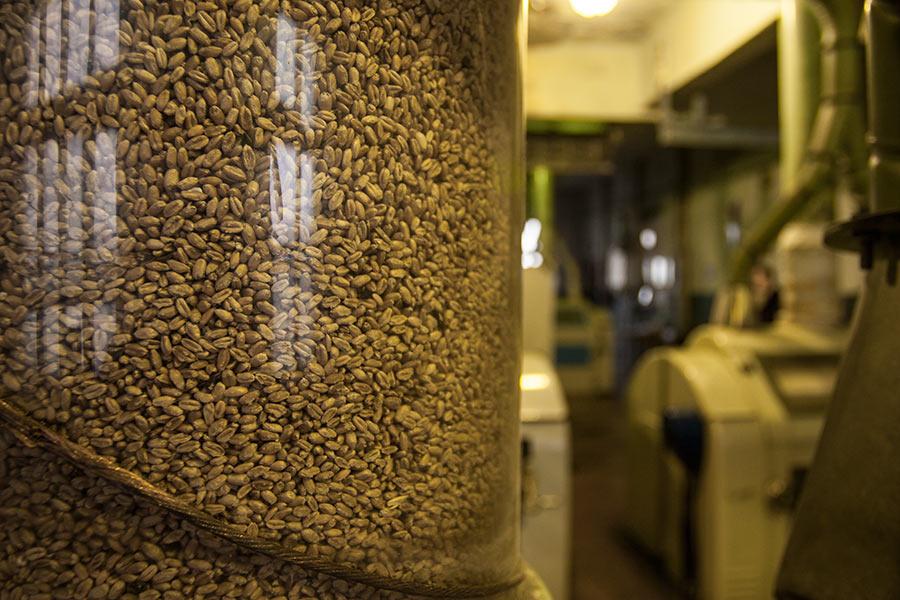 К новосибирскому зерновому рынку пригляделся Алтай - Изображение
