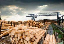 Крупное предприятие лесхоза «Сиблес Проект» может стать банкротом