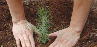 В рамках нацпроекта «Экология» в Красноярском крае увеличат объемы лесовосстановления
