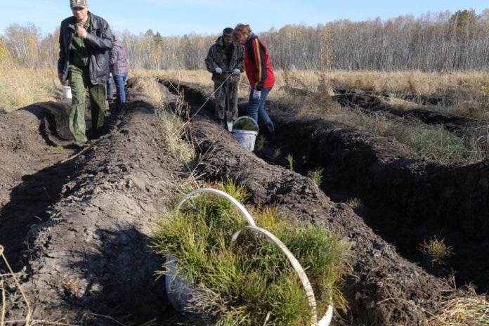 Областные депутаты предложили правительству заняться лесосбережением