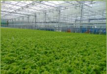 Предприятие по выращиванию огурцов и салата может стать резидентом ТОСЭР в Иркутской области