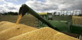В Красноярском крае появится завод по глубокой переработке зерна