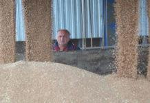 В Красноярском крае появится многомиллиардный комплекс по глубокой переработке зерна